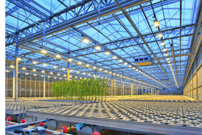 Figure 4. A new automated greenhouse in Marana, Arizona opened in March of 2020 for the purpose of developing seed corn products with advanced technologies.