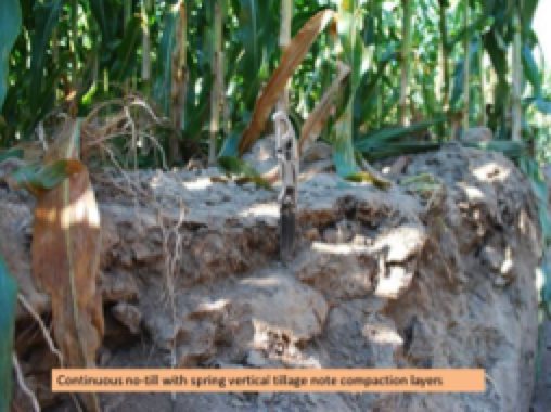 A soil pit can show how compaction restricts root growth.