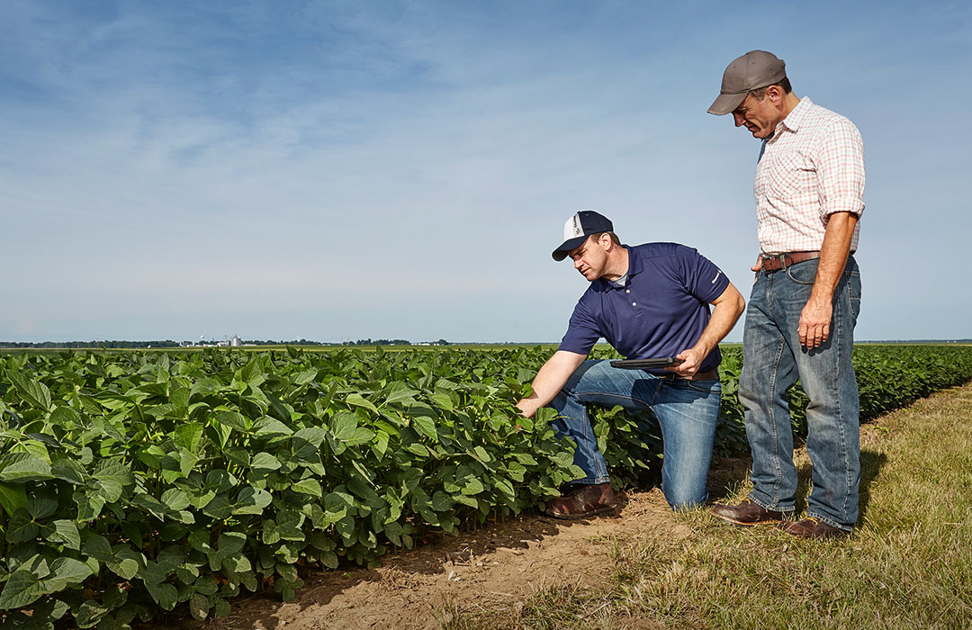 Channel Seedsman kneeling in a field of Soybeans with a Grower.