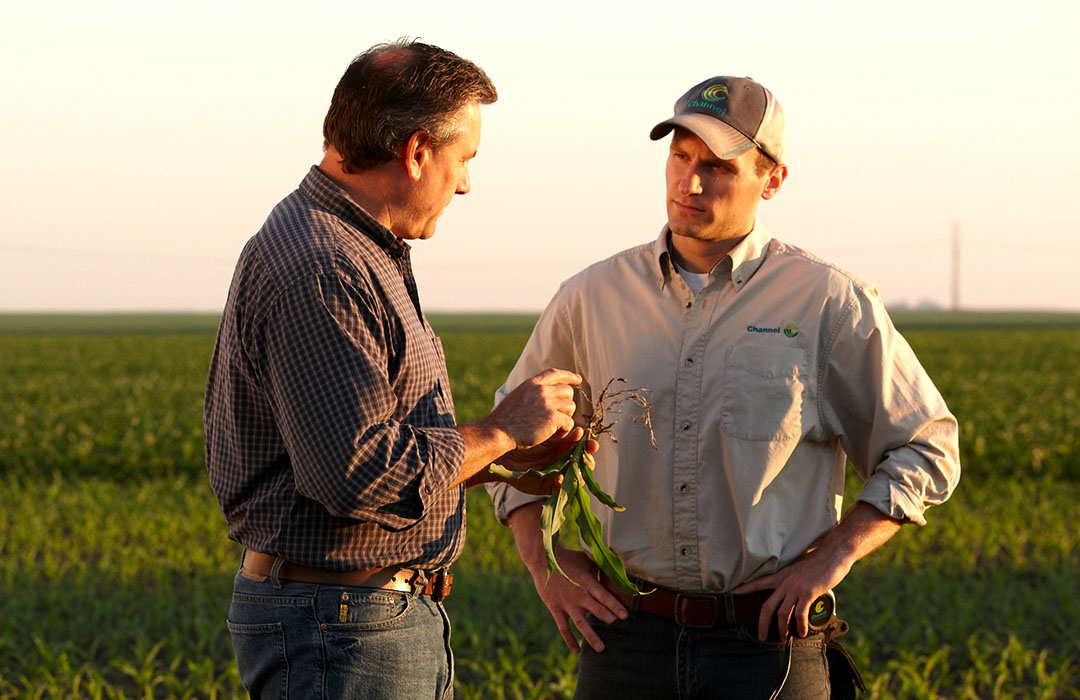A Channel Seedsman is talking in a field to Grower who is holding a plant root.
