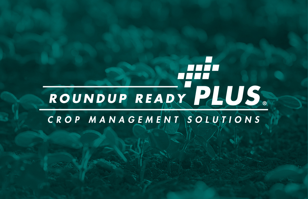 Official Roundup Ready Plus Crop Management Solutions logo on Channel website. It's an overlay on Channel soybean plants.