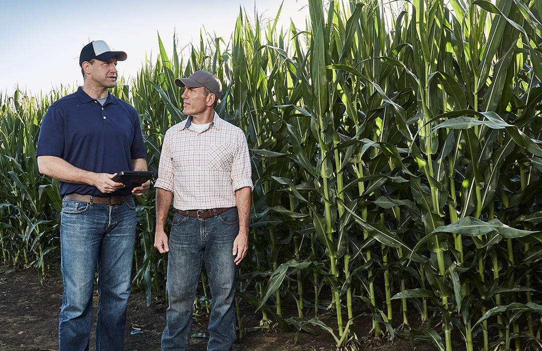 A Channel Seedsman and a grower are talking within a Channel food grade corn field.